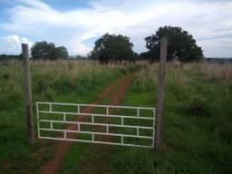 Fazenda para gado e piscicultura
