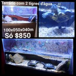Aquario Terrario completo