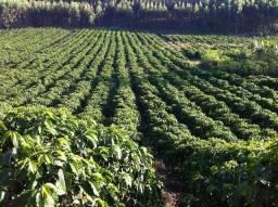 Fazenda 43 Alq - São Domingos do Norte/ES (R$ 3,5 milhões + R$ 1,3 milhão financiamentos)