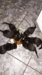 gatos filhotes
