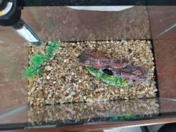 Kit completo de aquário 6L com decoração