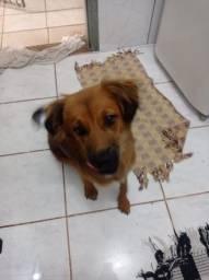 Título do anúncio: Doação de dog(castrada)