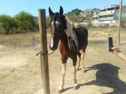 Título do anúncio: Cavalo castrado