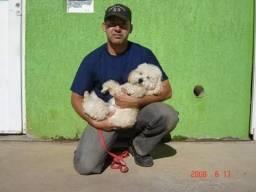 Passeidor de cães e adestrador