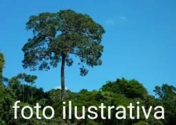 Título de fazenda de 300 hectares em Roraima, ler descrição do anuncio