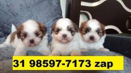 Canil Filhotes Cães Belos BH Lhasa Maltês Pug Shihtzu Yorkshire Basset