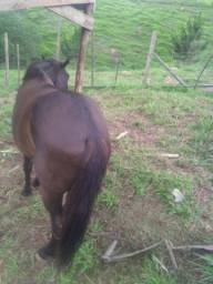 Vendo cavalo pôr 6.000