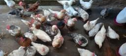 Título do anúncio: Vendo galinha caipira