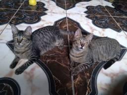 2 gatinhos para adoção responsável.