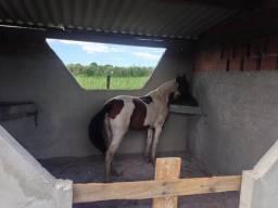 Hotel para cavalos