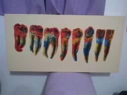 Quadros Odontológicos