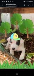 Título do anúncio: Cachorro macho porte pequeno