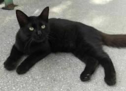 Lindo gato peludo pra adoção - Leia a descrição