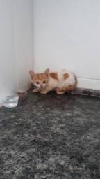 Filhote de gato para adoção