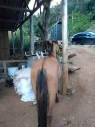 Vendo ou troco potranca crioula mansa de montar tem que terminar a doma