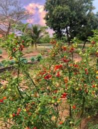 Fazenda em Bela Vista
