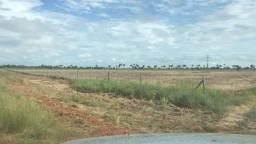 Arrenda-se um sítio com 200 hectares, a 30 km de Boa Vista RR