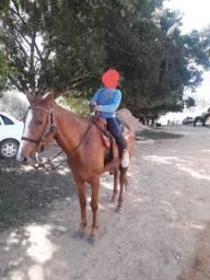Cavalo com traía completa
