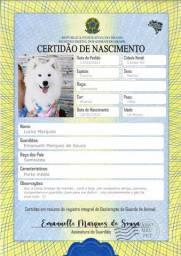 Certidão de Nascimento para Pets