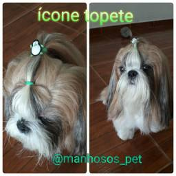 Título do anúncio: Acessórios Penteados Pets