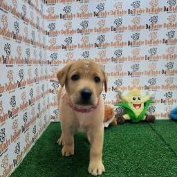 Título do anúncio: Labrador dia das Crianças