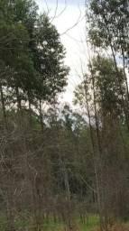 Escora de eucalipto