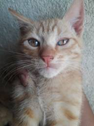 Estou doando estes 3 gatinhos