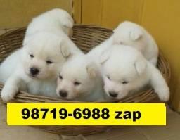 Canil Filhotes Cães Lindíssimos BH Akita Pastor Rottweiler Labrador Golden Dálmata