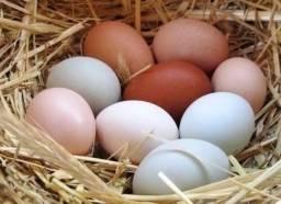 Ovos caipira orgânicos 30 ovos 30 reais