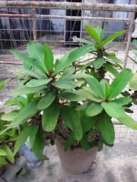 Plantas ornamentais e medicinais