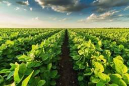 Procuro terra pra arrendar pra lavoura de soja
