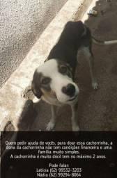 Título do anúncio: Doação de uma cachorrinha