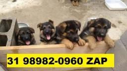 Cães em BH Filhotes Pastor Akita Golden Chow Chow Dálmata Boxer Labrador Rottweiler