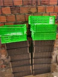 Caixas plásticas de Hortifruti
