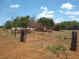 Chácara de 7 alqueires entre caldas e Piracanjuba, valor 750