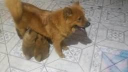 Vendo uma cachorra c duas filhas 77991829478