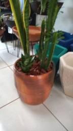 Tupy plantas