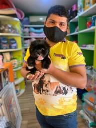 Lhasa com duas vacinas virais APROVEITE