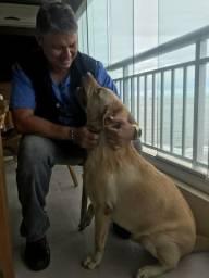 Adestramento Pará Cães.
