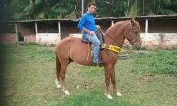 Vende:se esse cavalo machador