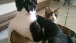 Doa-se 2 gatos