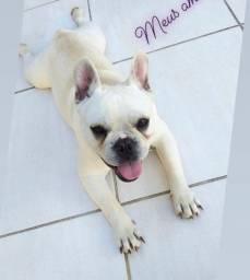 Filhotes de Bulldog Francês a venda