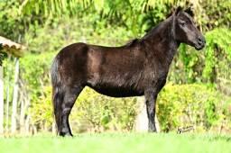 Vendo mini ponei preta(ler anúncio)