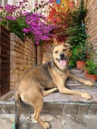 Doação linda cachorrinha castrada vacinada