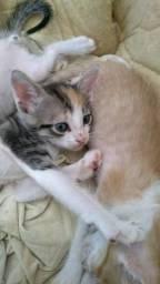 Doação de gatos calicós
