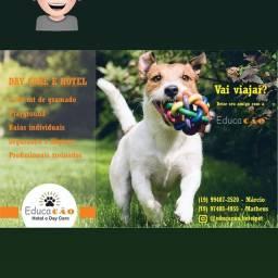 Hotel day Care / creche e adestramento de cães.