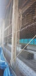 Barracão de bicho da seda. 27 de comprimento por 9 de largura
