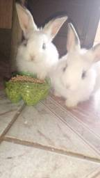 Título do anúncio: Vendo coelho