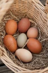 Ovos Orgânicos de Galinhas Felizes