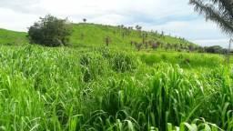 Fazenda em buriticupu